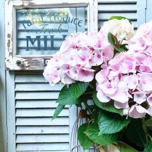 心配な紫陽花とパーテーションDIY*