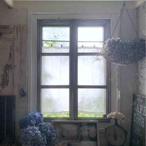 窓にナチュラルなグリーン + 心配事の近況*