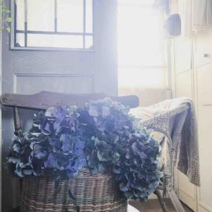 沢山の紫陽花と母の具合*