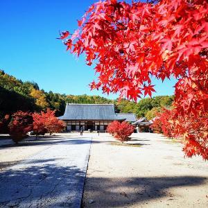 秋の神石高原町 穴場紅葉スポット「光信寺」に行ってきました♪