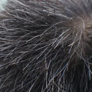 安曇野市 ウィッグ 購入するとき自分の髪を丸刈りにした方が良い?