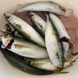 魚が嫌いだから魚料理をします。