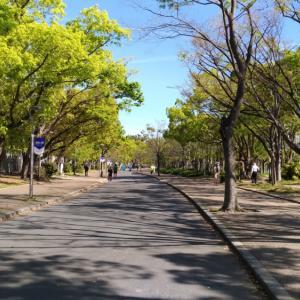新緑の長居公園!