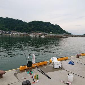 能生漁港でマメアジ
