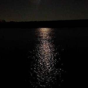七月二十一日夜中から二十二日早朝にかけての出来事~河川アメリカナマズ&アオウオ~