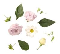 小さなバラのリース
