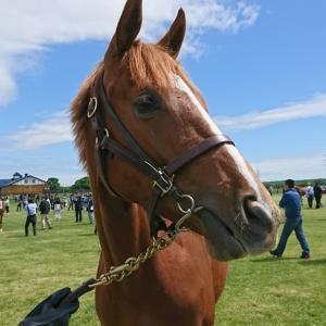 2020年募集馬見学ツアーの行方