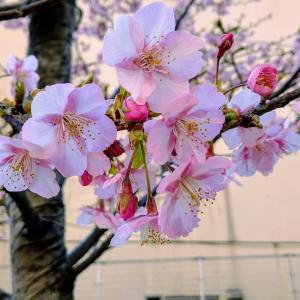 咲く桜に散る桜、勝ち上がる馬に引退する馬あり