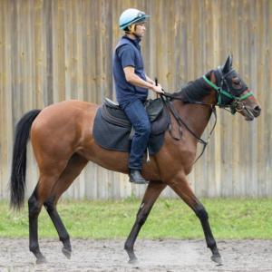 涼しい北海道でゆったりと育成されてる2歳愛馬2頭