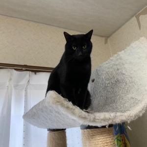 黒猫は、難しい。ご支援のお力添えをお願いします