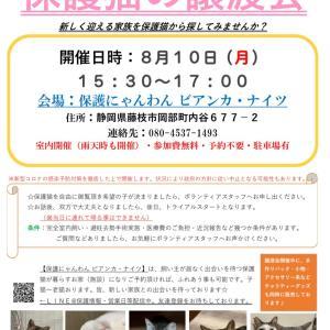 8月は2回譲渡会を開催します。