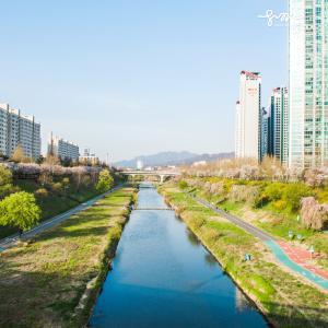 江南で最も美しい桜の名所はどこでしょうか?