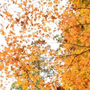 大矢田神社で紅葉狩り