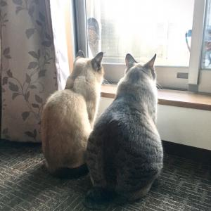 シャム猫さんたち《鳥さんいたかな?》