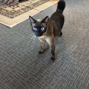 シャム猫風味なリョウくん《何でしょう?》