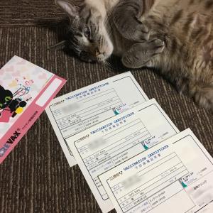 シャム猫さんたち《ワクチン&LINEスタンプ第2弾。》