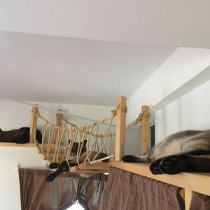 【猫動画】シャム猫さんたち《キャットウォーク&吊り橋の野郎共。》