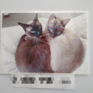 堺市動物愛護フェア写真展に行ってきました。