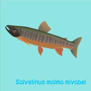 ミヤベイワナ