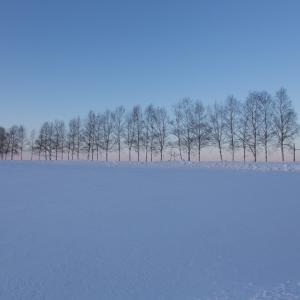 北海道スキー場、積雪情報