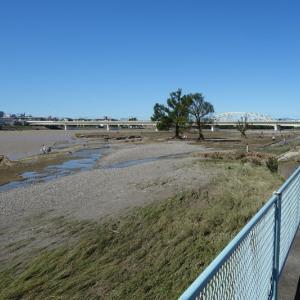 多摩川の惨状。