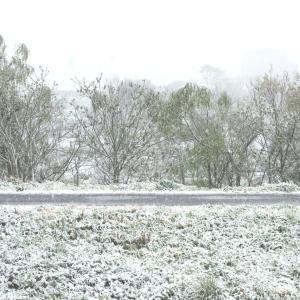 桜と雪の舞う日。