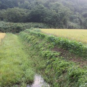 【考える】 稲刈り開始日。