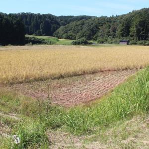 【 稲刈りメーター 】始めます。