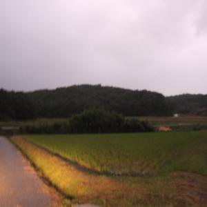 【 台風 】耐えてくれました。