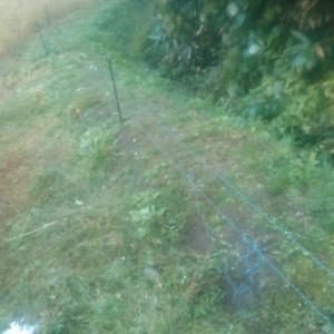 【電気柵周辺】 草刈り終了