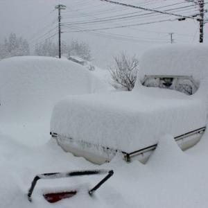 【 雪囲い 】