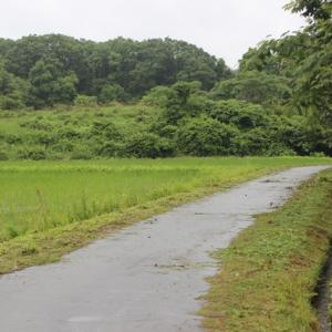 【 梅雨空 】 冷夏へ