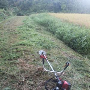 【 子育て6年目の 】 稲刈り