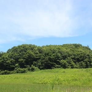 【 草刈り風景 】