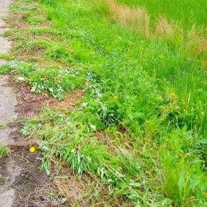 【 水路周辺の 草刈り 】