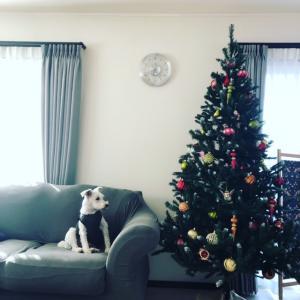 今年のクリスマスツリー出しました♪♪