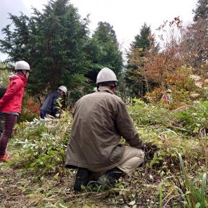 NPO法人石鎚森の学校とえひめ千年の森をつくる会のコラボ森林保全活動