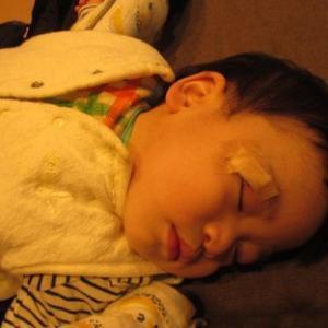 アトムがまぶたを切って5針ぬった 今日も病児保育