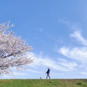 桜お写んぽ 2