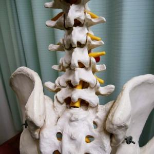 ぎっくり腰と骨盤調整の症例紹介