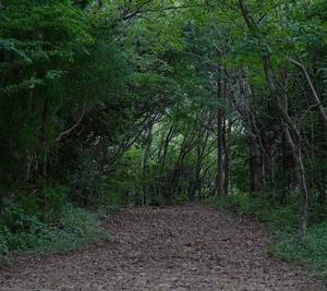 「浜名湖でキツネ!」&「濃い緑の奥山高原」へ