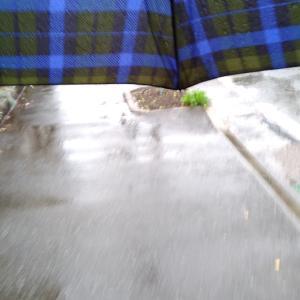 朝から、ずーっと雨!