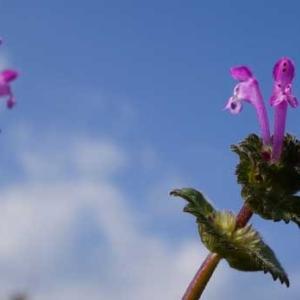 正月に見かけた花々
