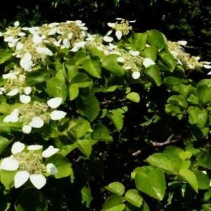 5月に見かけた花々(3)