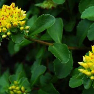 6月に見かけた花々(2)