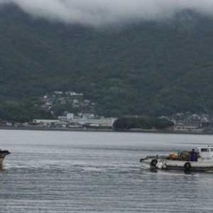 内海湾でイリコ漁が始まっています。