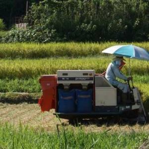 稲刈りが始まっています。