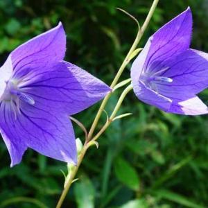 7月後半に見かけた花々