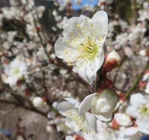 秘境にも春!