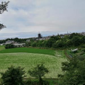 播磨町「野添の五重塔」数百年先の名所旧跡を見据えて